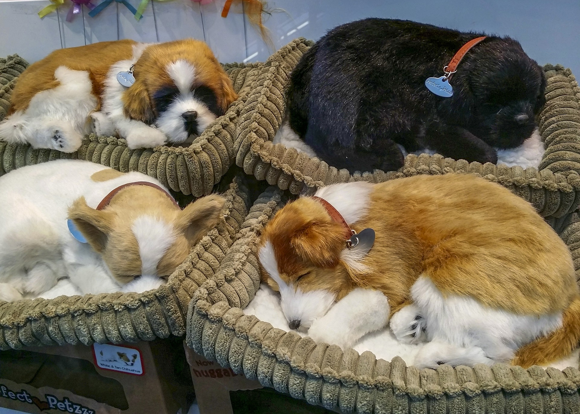 puppy dogs in their bed