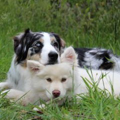 two dogs laying in the grass